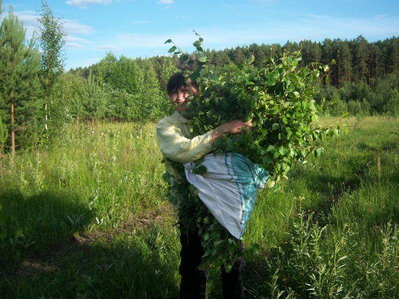 Как правильно заготовить веники для русской бани?