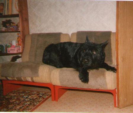 Как отучить собаку лазить на диван