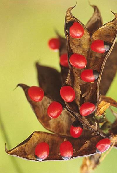 Как уберечь домашних животных от отравлений: 10 опасных растений