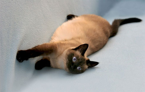 кошка валяется на диване