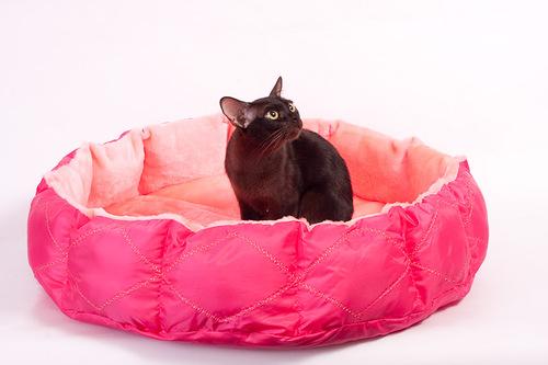 маленькая кошка внутри большого розового лежака