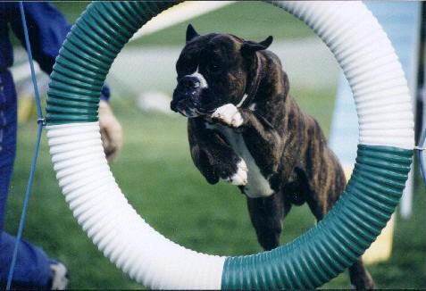 Как выбрать себе собаку в соответствии с темпераментом. Часть 1