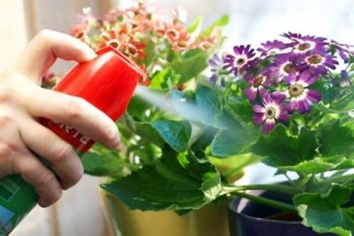 Как избавится от вредителей и болезней комнатных растений