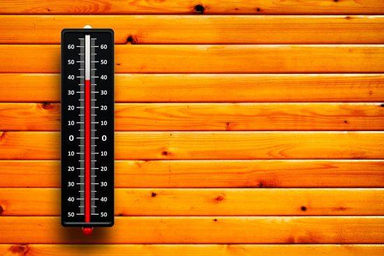 Как уберечь домашних питомцев от опасностей, которые подстерегают их летом