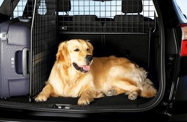 Как перевезти домашнее животное в такси