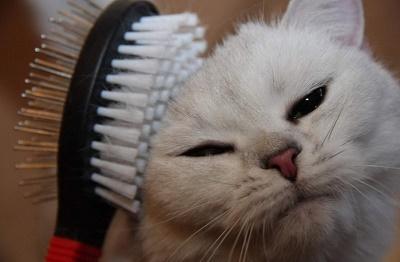 Как выбрать инструмент для ухода за шерстью кошки