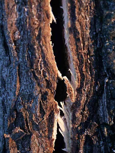 Как распознать брак древесины?