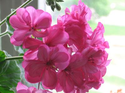 Как подобрать идеальный цветок для вашего дома?