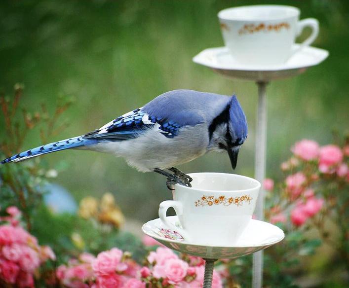 Доброе утро птицы картинки красивые