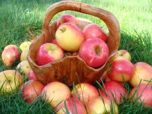 Как использовать урожай яблок