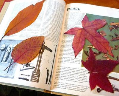 Как засушивать листья