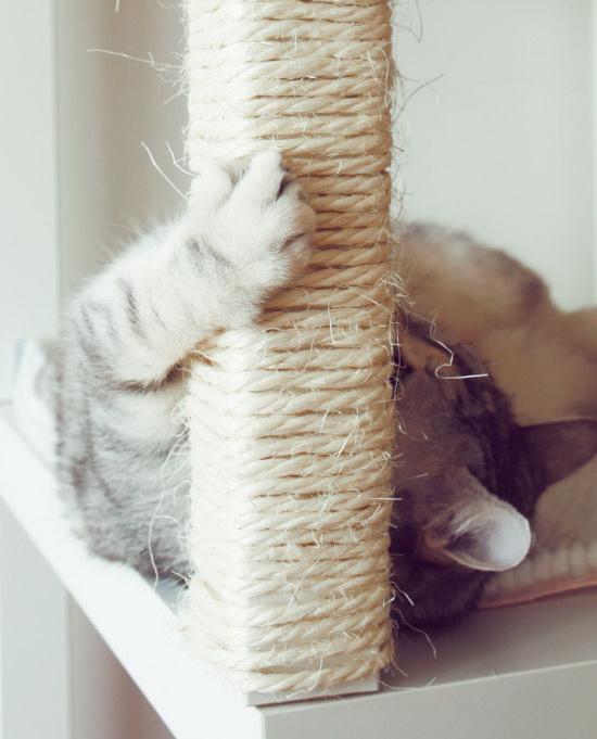Как использовать самые крутые лайфхаки для кошки?