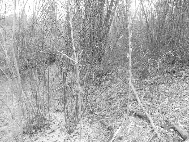 серые и унылые заросли деревья ранней весной или поздней осенью