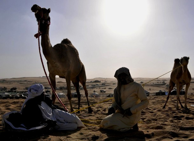 Как проходят конкурсы красоты среди верблюдов