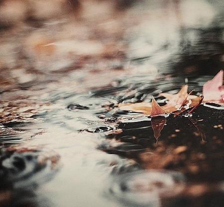 одинокий кленовый лист в ручье позволит вам добавить динамики в снимок
