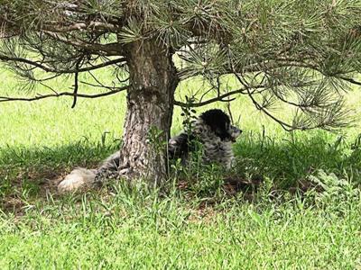 Если на участке есть несколько деревьев, обеспечивающих достаточно тени, навес можно не строить