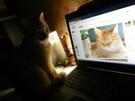 Как животные становятся звездами интернета