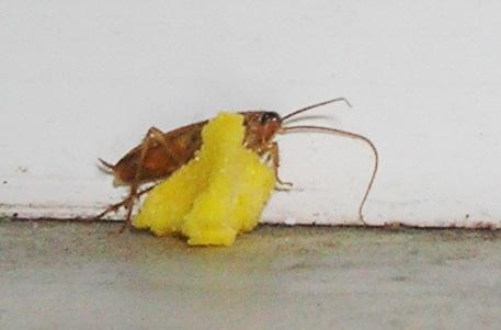 Как бороться с домашними насекомыми?