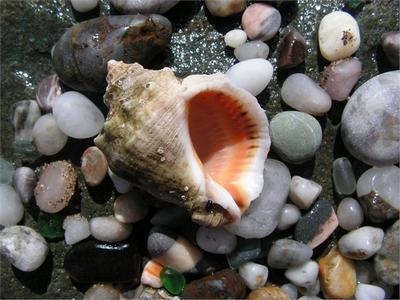 Как с пользой использовать морские камни?
