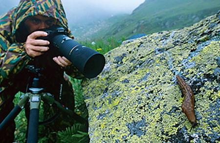 Как заниматься макрофотографией