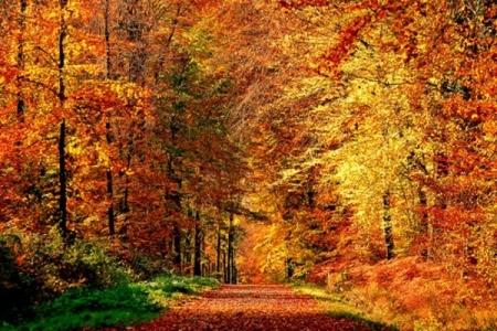 Как улучшить настроение осенью