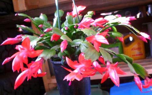 Как выращивать живые цветы зимой