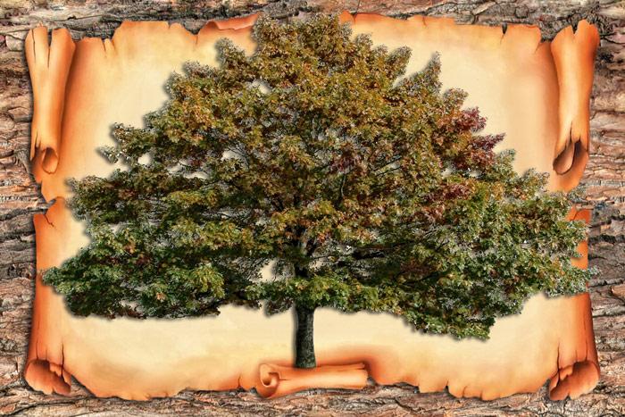 Как составить генеалогическое дерево