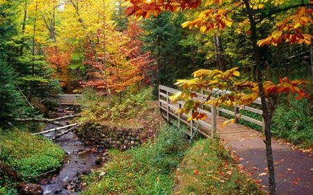 Особый цвет голой земли по бокам лесного ручья и листья на бережках – это восхитительно