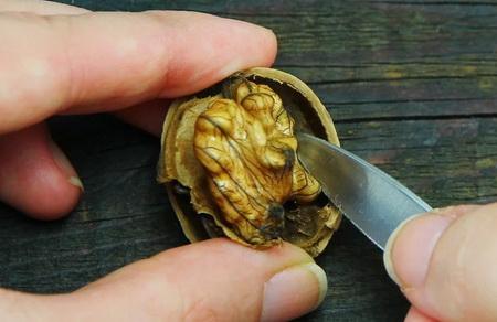 Как правильно очистить и раскрыть грецкий орех?