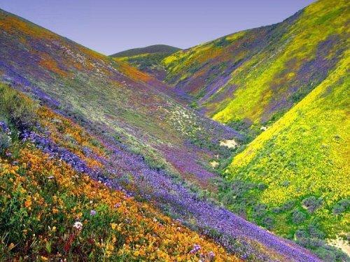 Долина Цветов в Индии ковер из разноцветных ярких цветов