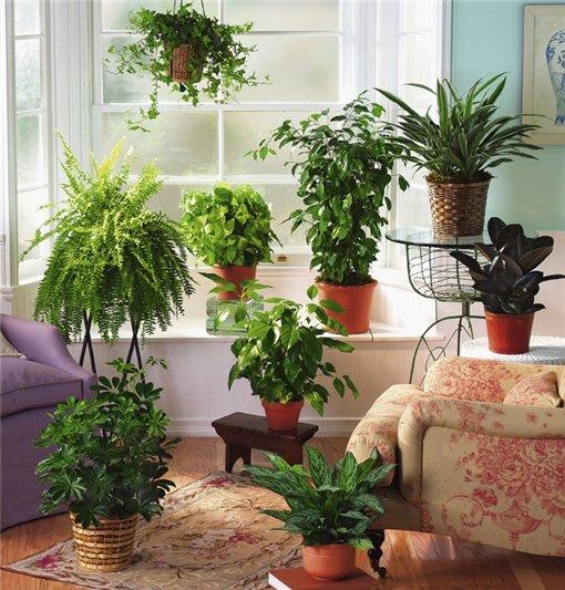 Как улучшить воздух в доме при помощи растений