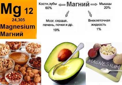 распределение магния в организме