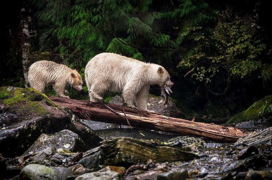 медвежий ужин - конкурс фотографии