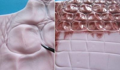 Как сделать имитацию шкур и костей животных из полимерной глины