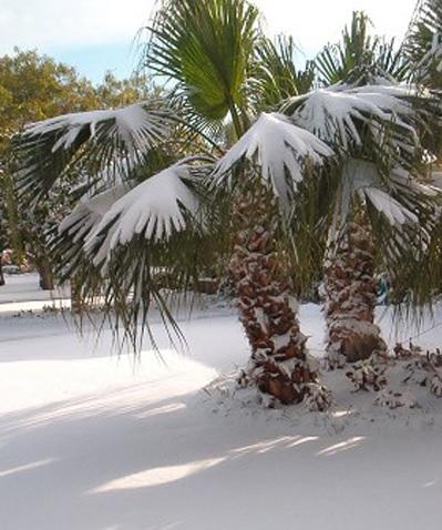 Зима в Африке