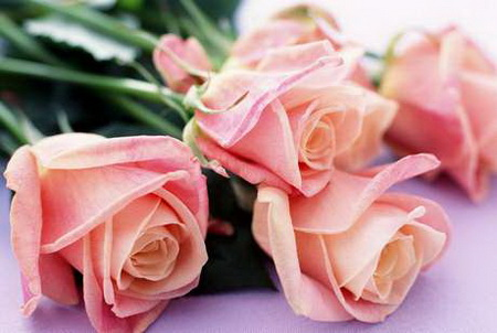 Как не попасть на уловки в цветочном магазине