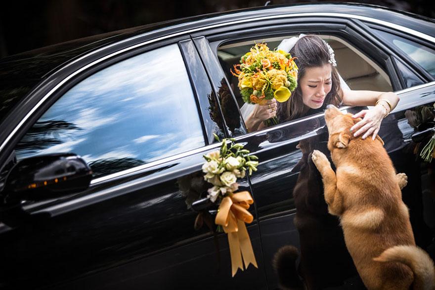 Свадебные снимки-лауреаты фотонаград 2014 г.: любовь семьи