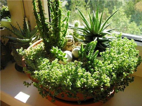 Как устроить микро - сад в жилом помещении