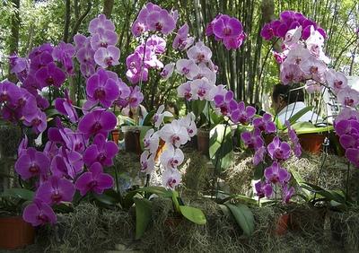 Как свести к минимуму риск покупки комнатных экзотических растений