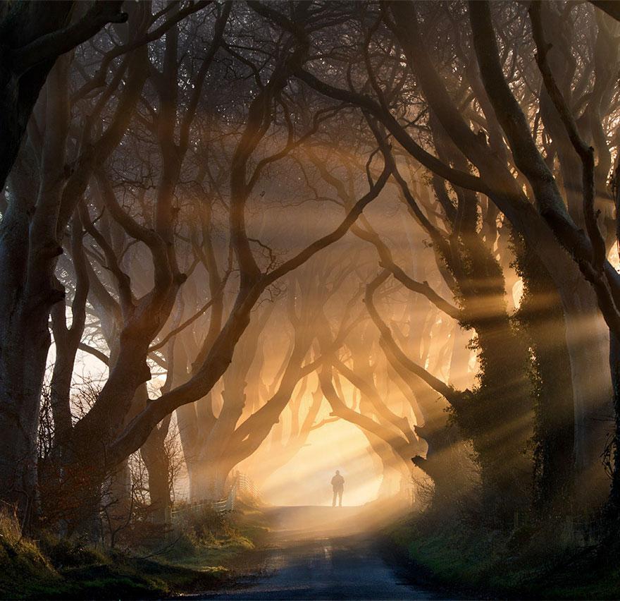 Темная аллея/тоннель Темный тупик/Аллея буков (Dark Hedges – Темная живая изгородь) в Ирландии, автор - Stephen Emerson