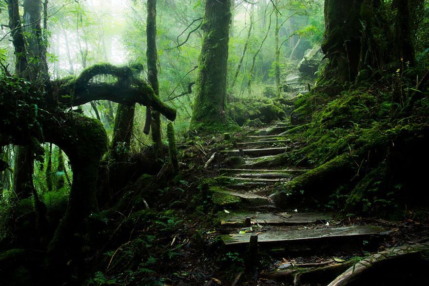 Путь через гору Тейпинг (Taiping Mountain Path) на Тайване, автор - Justin Jones