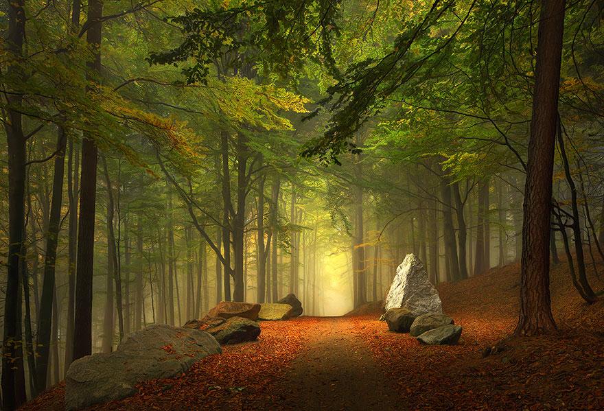 Лесная дорога в Баварии, Германия, автор - Kilian Schönberger