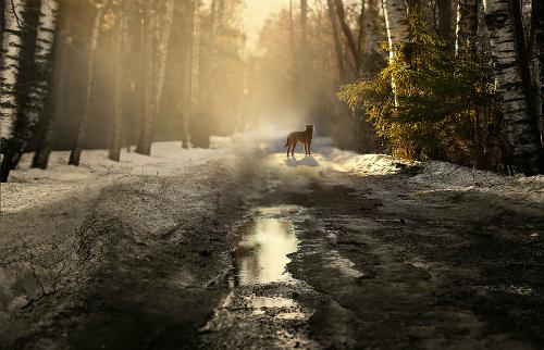 Путь через русский лес, автор - Елена Шумилова