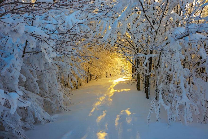 Зимний восход на дороге через Национальный парк Кампинья (Campigna National Park), Италия, автор - Roberto Meloti