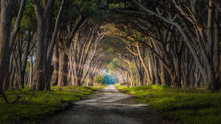 Парк Мильярино-Сан-Россоре (Migliarino San Rossore Park), путь в Пизу, Италия, автор - Andrea Iorio