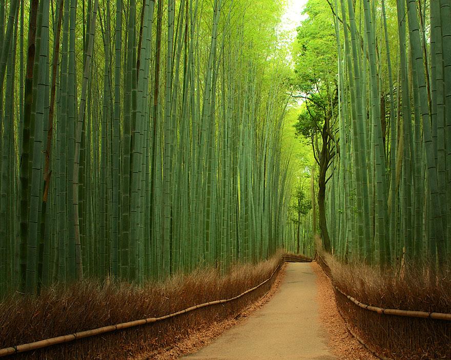 Бамбуковый путь в Киото, Япония, автор - Yuya Horikawa