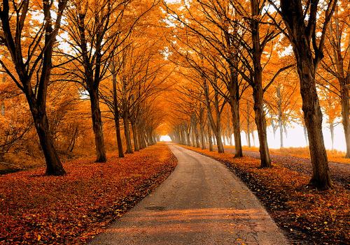 Осенний путь, автор - Lars Van Der Goor