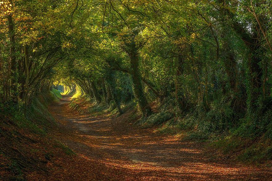 Путь наверх до мельницы Халнакер (Halnaker) в графстве Суссекс, Великобритания, автор - Sam Moore