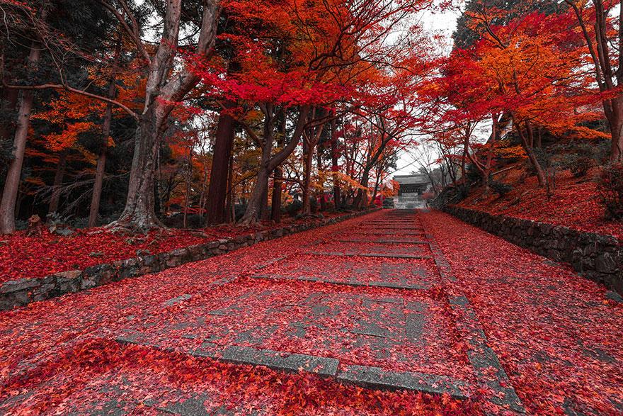 Осенний путь в Киото, Япония, автор - Takahiro Bessho