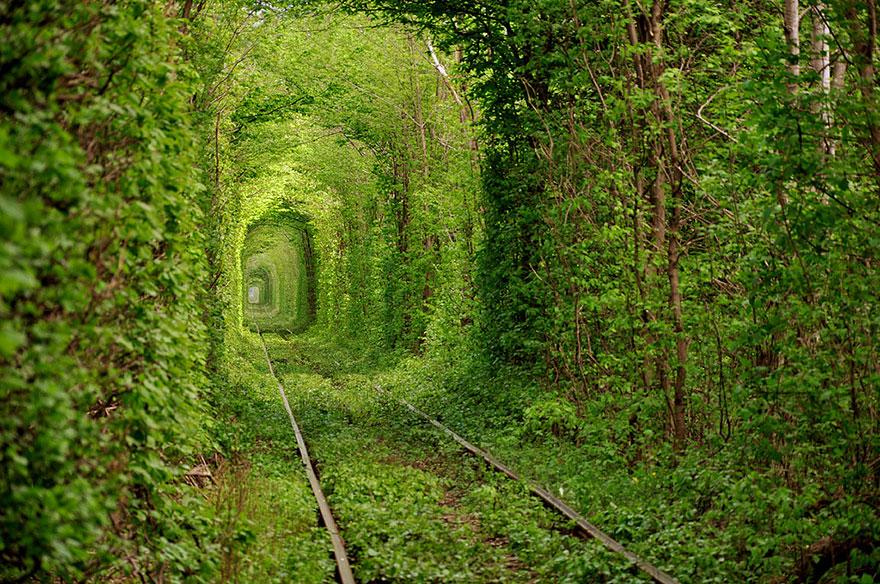 Тоннель Любви, Украина, автор - Олег Гордиенко
